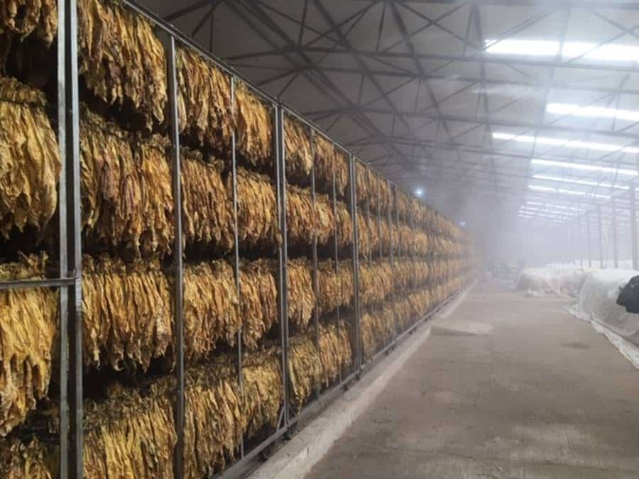 Tobacco Curers